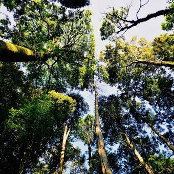 Tree seen from below