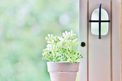 Doors and plants