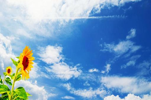 Sunflower and blue sky desktop image