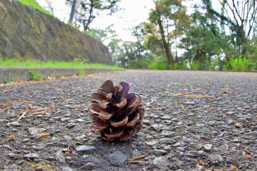 Alone pine cone
