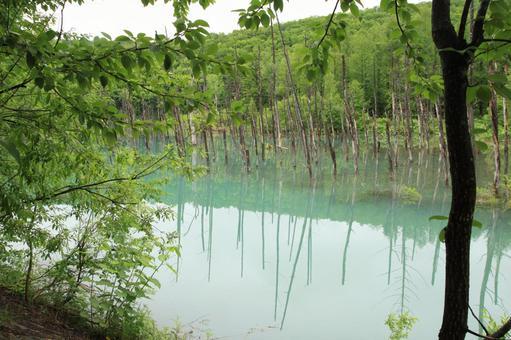 푸른 연못 1