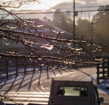 Morning when tree branch freezes 2