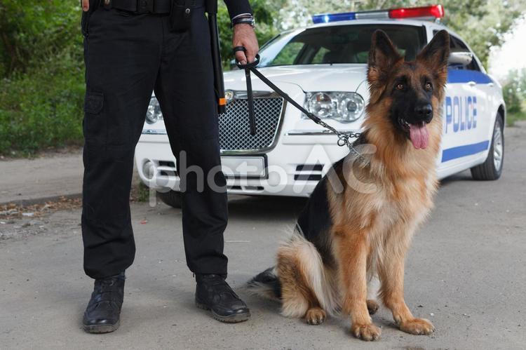 警察犬8の写真