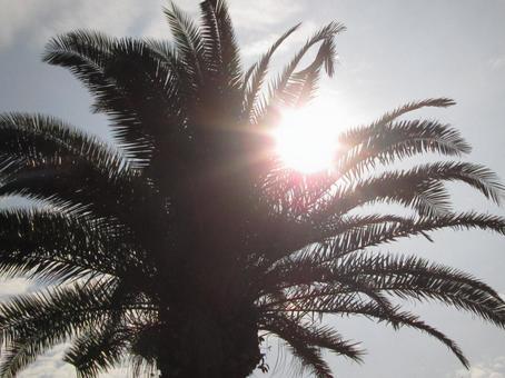 눈부신 햇살 2