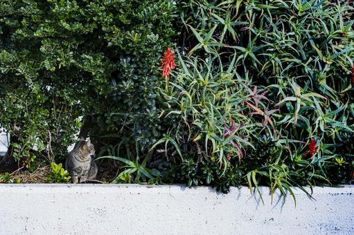 고양이와 알로에의 꽃