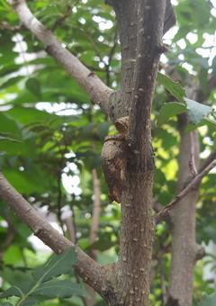 蛹孵化痕跡