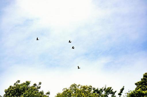 초여름의 푸른 하늘 조류가