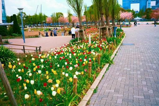 Odaiba tulip field