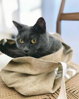 Cat in a jute bag