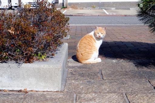 아카시의 도둑 고양이