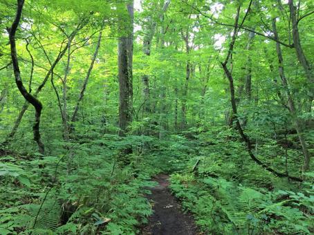 Forest trail 4 Oirase mountain stream