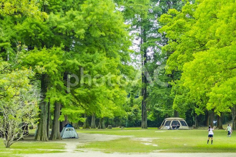 キャンプの風景1の写真