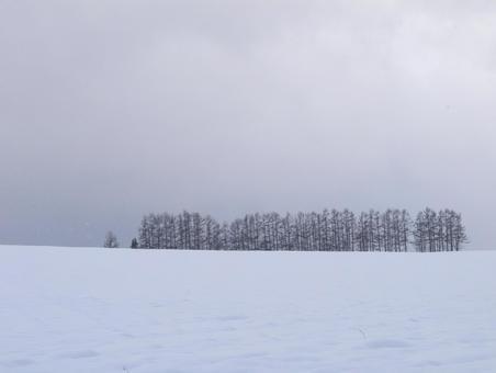 Hill of Biei / Mild Seven in winter