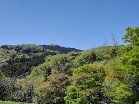 신록의 산