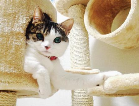 A cat lurking in the cat tower looking from above