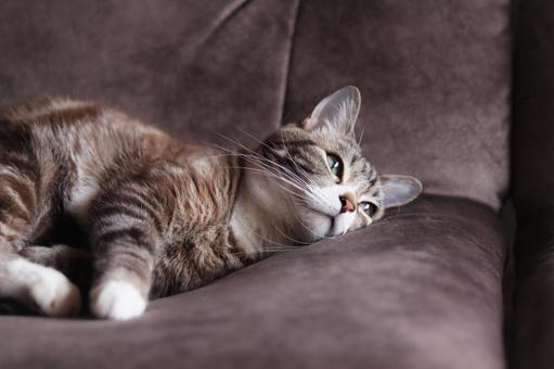 A cute tabby cat lying comfortably