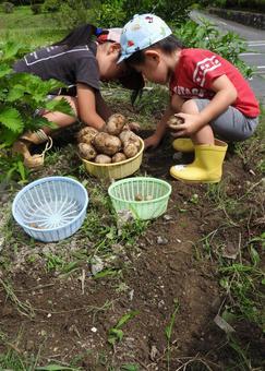 Potato digging kids 03