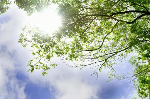 Fresh green and blue sky Sunbeams background