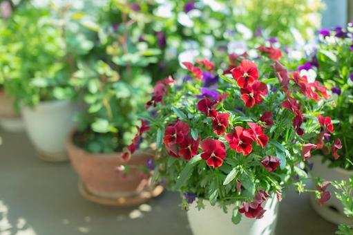 Fantastic flowers 147