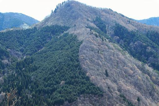 침엽수와 활엽수의 경계 (봄 산)
