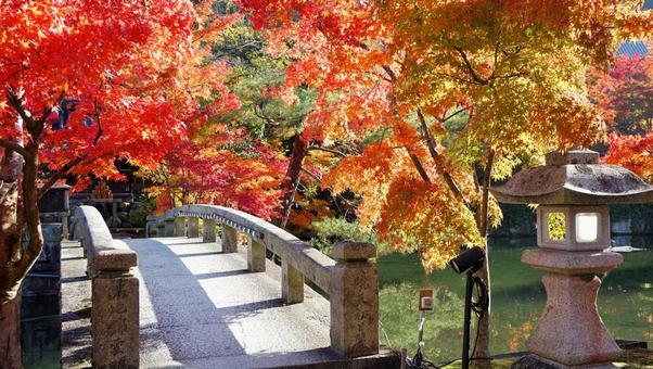 Autumn leaves Eikendo Kyoto