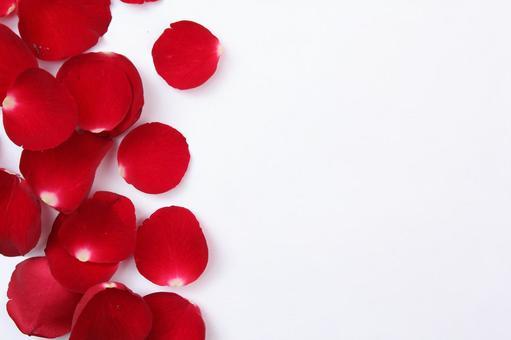 Valentine's rose petals 5