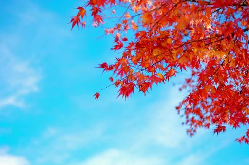 Blue sky and autumn leaves