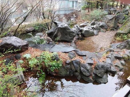 정원의 연못과 1 마리의 오리