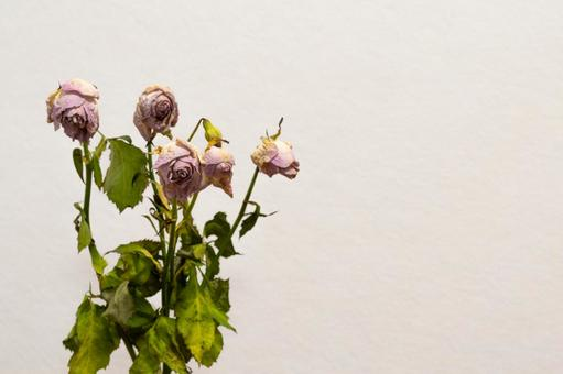 Dried flowers of spray roses