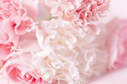 Mother's Day image Pink and white carnation