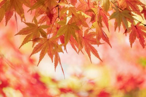 秋葉的漸變背景