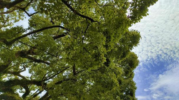 Fresh green tree 004