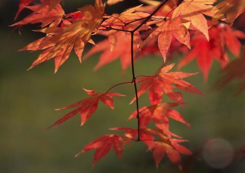 Fall gradation