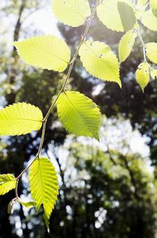 빛과 잎 3