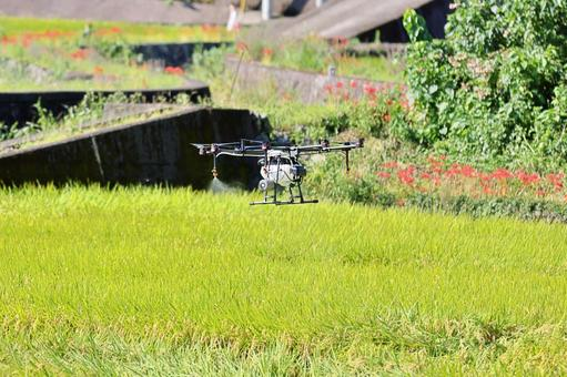 Spraying pesticides with a drone