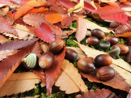 Acorn and fallen leaves