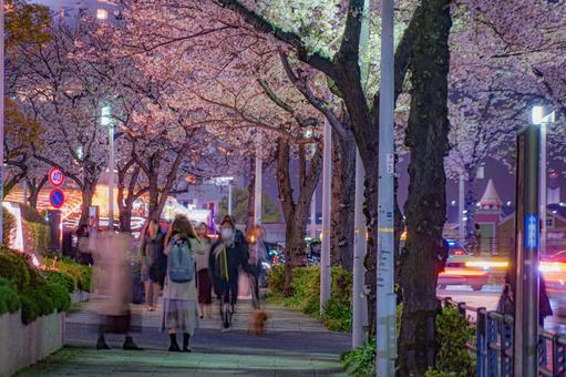 벚꽃과 요코하마 미나토 미라이의 야경