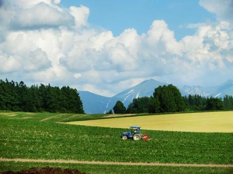 Vegetable field in Hokkaido