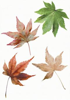 Cut out material Autumn leaves set