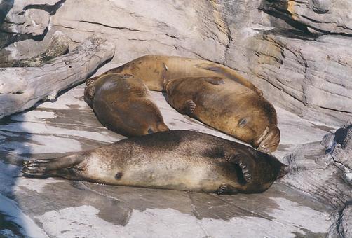 Seal [seal] - 002