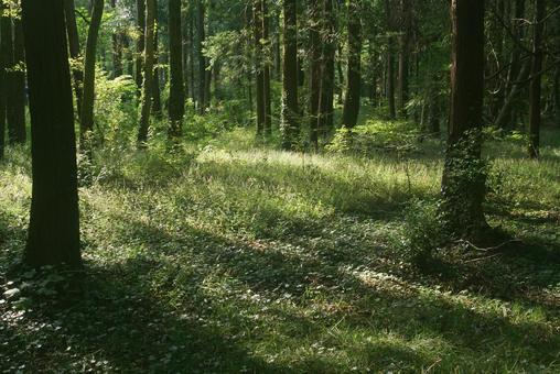 Trees_Forest_71