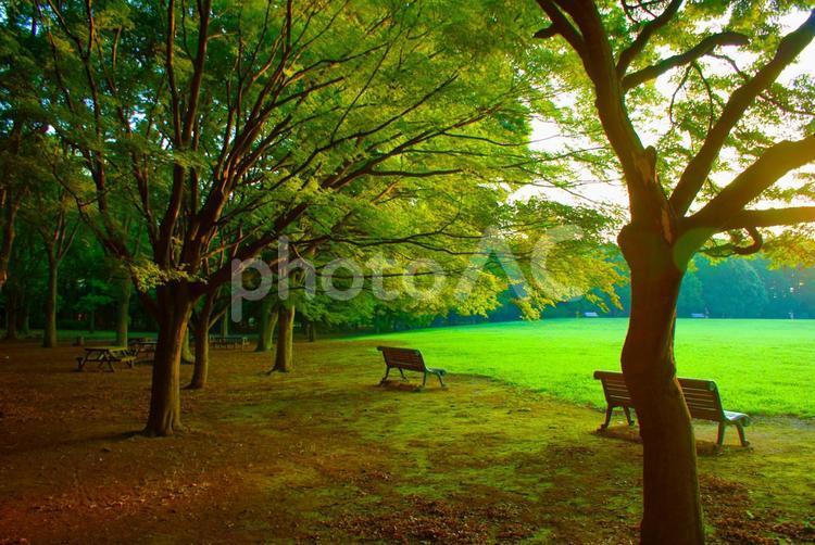早朝の神代公園の写真
