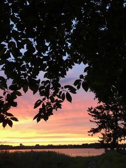 Sunset sky cherry blossom leaves