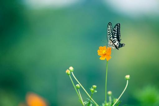 Yellow flower and butterfly 6