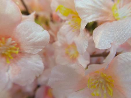 벚꽃의 조화 (계절)