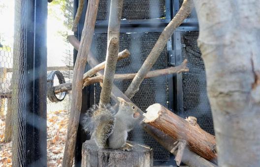 [Animal] Squirrel Squirrel Creatures Zoo Creatures