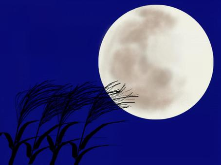 Full moon and pampas grass_1