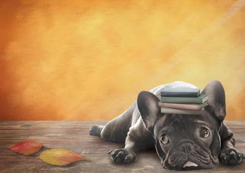 秋季閱讀法國鬥牛犬