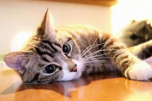 고양이 고양이 고양이 귀여운 고양이 응석 고양이