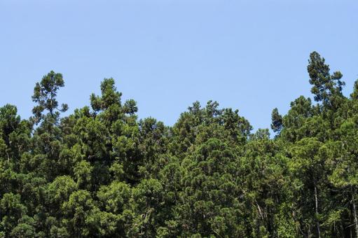檜木和天空